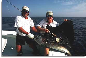 Fly-casting to sailfish