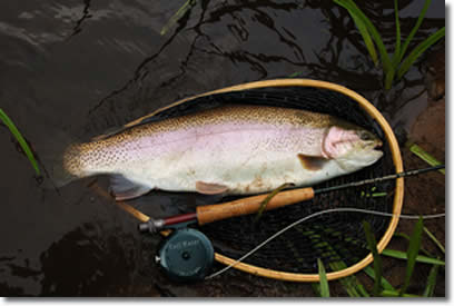 Fly fishing trophy trout